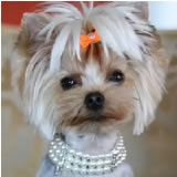 Dog Necklaces Gorgeous Jewelry Bowbiz Dog Bows Quality Dog