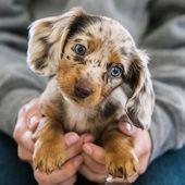 ….  – Baby Animals