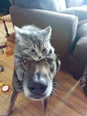 Der arme alte Hund, der mit Übergepäck gesattelt wird, ist allerdings glücklich.