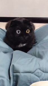 Tik Tok Cats P3  Those eyes