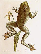 Reptiles, anfibios y animales exóticos – Tuatera Blog: GALERÍA de grabados y …   – frugs