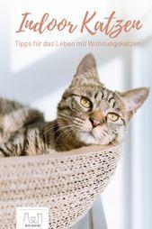 Vor dem Kauf einer Hauskatze stellt sich die Frage, wie man die …   – Leben mit Katzen