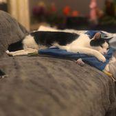 #katzen #catsofinstagram #cat #cats #katze #catstagram