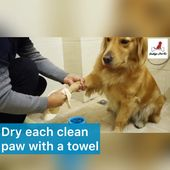 Indigopetco™️ World's Most Efficient Pet Paw Cleaner