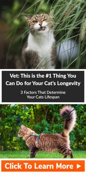 Vet This Is The 1 Thing You Can Do For Your Cat S Longevity Cats Indoor Pets Cat Facts