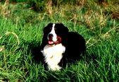 Projektideen zur Hundewissenschaftsmesse