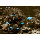Glass picture Animals Underwater, photo print in cyan East Urban Home Wall mounting color: Black, Size: 40 cm H x 120 cm W x 0,5 cm D