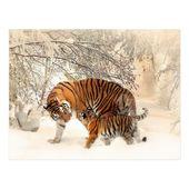 Winter Tigers postcard | Zazzle.com  – Tigers