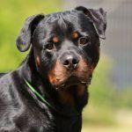 Jumper Tierheim Tiere Hunde Verstehen