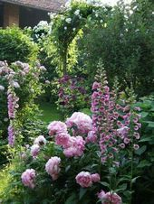 The Peony: Tips for the perennial and shrub species
