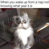 20 Cat-Meme, die die perfekte Ergänzung zu Ihrer Caturday-Routine sind