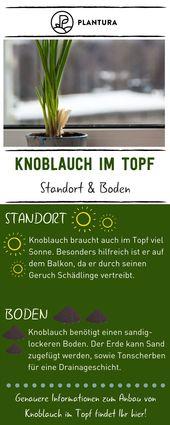Knoblauch im Topf anbauen: Video & Anleitung   – Balkon: Pflanzen & Ideen