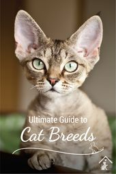 Ultimate Guide to Cat Breeds – kissmau