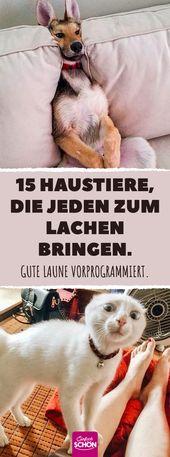 15 Haustiere, die jeden zum Lachen bringen. Gute L…