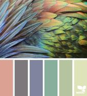 Feathered Hues