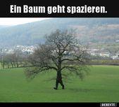 Ein Baum geht spazieren… | Lustige Bilder, Sprüche, Witze, echt lustig