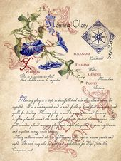 Grimoire, Spell, Herbs and Book of Shadows Pages, Practical Magic; The Cackling Cauldron ~ Book of Shadows 4 page set #9 – Винтаж