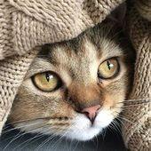 Toca dos veces esta foto para unirte al palacio del gato I de Collin. Un grupo de gatos de todo …   – Cute