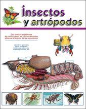 Uniforme en este mismo artículo el enlace a las hojas dedicadas a la anatomía …  – insectos