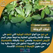 نبات الرجلة او الفرفحينه Herbs Info Food