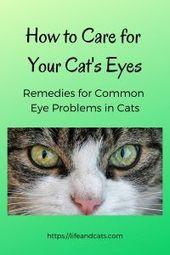 Wie Sie die Augen Ihrer Katze pflegen – Cat Health – #Care #Cat #Cats #eyes #Health   – katzen