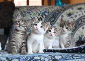 Queremos daros las buenas noches con esta preciosa imagen de estos cuatro herman…