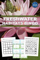Freshwater Habitats Bingo