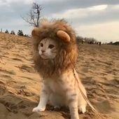 Lion King Kitty – Cooles Kratzbaumhaus – #Cat #cool #House #King #Kitty #Lion