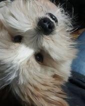 Well, hello there! . . #shitzu #sitzubrasil #animal #shitzulovers #animais    – Pet Ideas