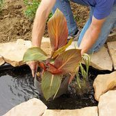 The Finest Crops for Your Water Backyard