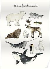 'Arctic & Antarctic Animals' Poster von Amy Hamilton