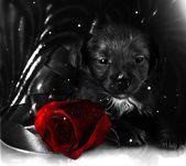 Pin By Rozalia Kovacs On Szep Napot Animated Animals Cute Gif Dog Love