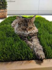 Einzigartige und Kreative Sichere Zimmerpflanzen zum Besten von Katzen (Zimmerpflanzen zum Be… – Katze