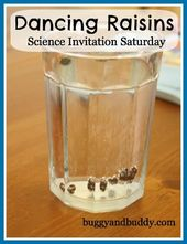 Dancing Raisins Science Experiment for Kids
