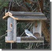 Excelentes mejores casas de pájaros que puedes armar ahora   – Vögel