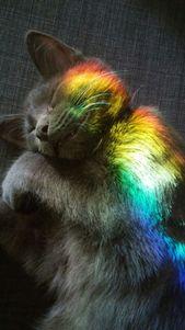 Entzückendes Kätzchen Loki schlief im Regenbogen ein. Wie mein Interesse? Folg… – Süße Kätzchen