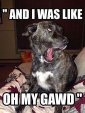 Más de 50 de los memes de perros más felices que te harán reír durante horas #dogmemes   – Tiere Bilder