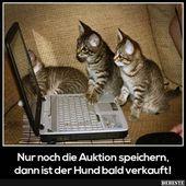 Beste Bilder, Videos und Sprüche und es gibt täglich neue lustige Facebook … – Cat Animal Videos. Lustige Bilder   – katzen