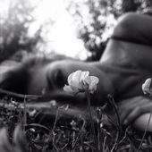 Liebe den Fokus in der Blume in diesem Bild.