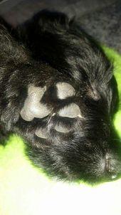 Pin By Kimberly Tarleton On Scotties 3 Scottie Terrier Scottie