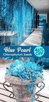 【46% off】Egrow 100 Pcs/Bag Blue Pearl Chlorophytum Seed Potted Plants Flower… – Gardening