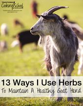 13 Ways I Use Herbs To Maintain A Healthy Goat Herd 1