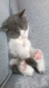 31 süße Katze Bilder – Adorable Kätzchen – Katzen Bilder