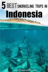 Best Snorkeling in Indonesia: Top 5 Destinations that will Blow You Away!