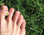tea tree oil for nail fungus #SkinCreamTeaTree #DrySkinCream – Dry Skin Cream
