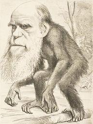 darwin.jpg (450×600)