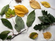 autumn leaf craft -