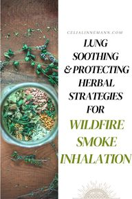 Lung Soothing Herbs for Wildfire Smoke Inhalation - Celia Linnemann