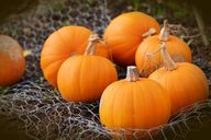 Helpful Tips for Choosing the Perfect Pumpkin | Fluster Buster