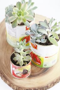 DIY Recycled Can Suc